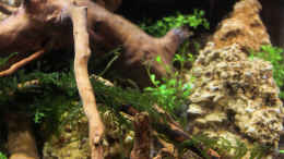 aquarium-von-southamerica-tiny-green-nature_31.01.2015