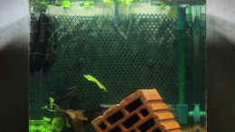 aquarium-von-southamerica-my-second-little-nano_