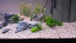 aquarium-von-dreadnought-wild-stones-and-plants_