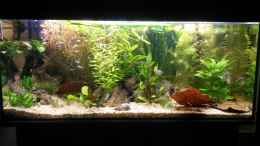 aquarium-von-dreadnought-wild-stones-and-plants_Aquarium Hauptansicht von wild stones and plants