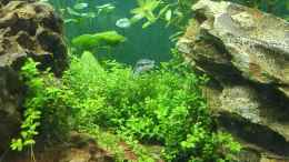 aquarium-von-tobias93-life-in-green_
