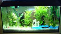 aquarium-von-david-will-becken-3220_