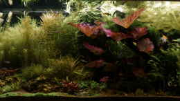 aquarium-von-foxi-inspiration-of-community_Hauptbild 27.04.2016