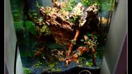 aquarium-von-scapers-love-plants-bucephalandra-pfuetze_
