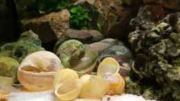 aquarium-von-dukes-aquaristikexperimente-live-and-let-die_
