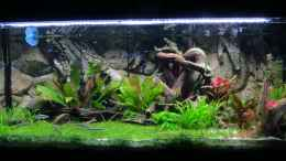aquarium-von-jan-s--amazonien_frontal