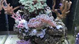 aquarium-von-bavaria-mini-premium-reef_