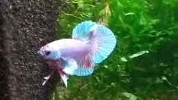 aquarium-von-stephy-bettas-home-2_Merlin