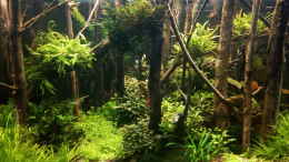 aquarium-von-mr-shrimp-forest-of-the-owles_20.09.2020