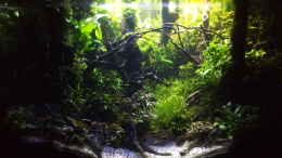 aquarium-von-mr-shrimp-forest-of-the-owles_Übergang zum Mondlicht