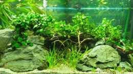 aquarium-von-gizz55-anubias-between-big-stones_Front Anubias between big stones