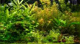 aquarium-von-dife-muc-little-world-4-0_24.12.20