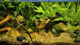 aquarium-von-okefenokee-giant-world_