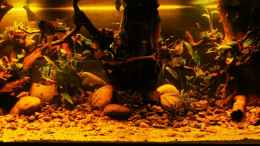 aquarium-von-aquaristik-naturbegabt-golden-river_Golden River (250x80x70)