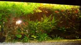 aquarium-von-rafael--nicky-portillo-becken-4828_