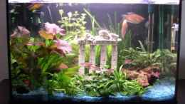 aquarium-von-to-be-becken-9450_