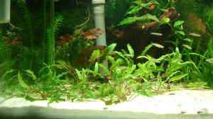Aquarien mit Filterbecken
