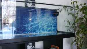 Aquarien mit Tunze Turbelle nanostream