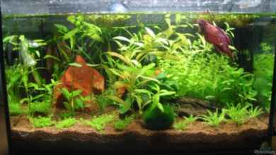 Betta Home von Dori