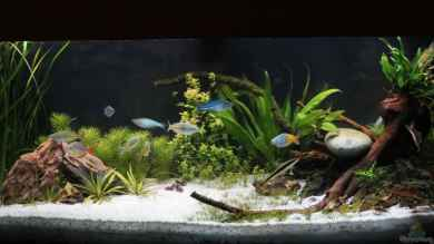 First Aquascap von David B