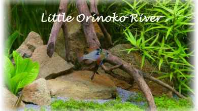 Little Orinoko River von Sambia