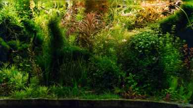 'Amazonas Scape' von Betta Chris