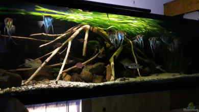 Aquarium Einrichtungsbeispiele Begeisternde Aquaristik