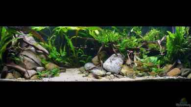 ~My-Little-Aquascape~ von ~Marco~