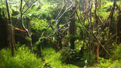 Forest of the Owles von Mr.Shrimp