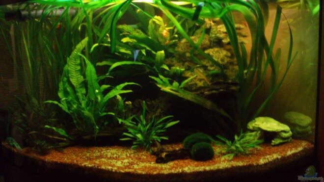 einrichtungsbeispiele wirbellose aquarium. Black Bedroom Furniture Sets. Home Design Ideas