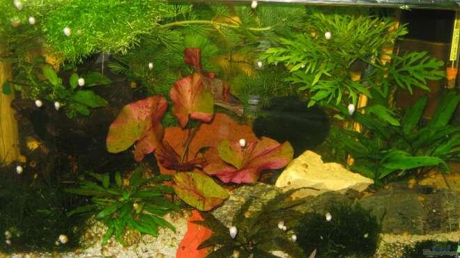 Einrichtungsbeispiele wirbellose aquarium for Seltene zierfische