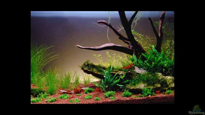 einrichtungsbeispiele aquascaping aquarium. Black Bedroom Furniture Sets. Home Design Ideas