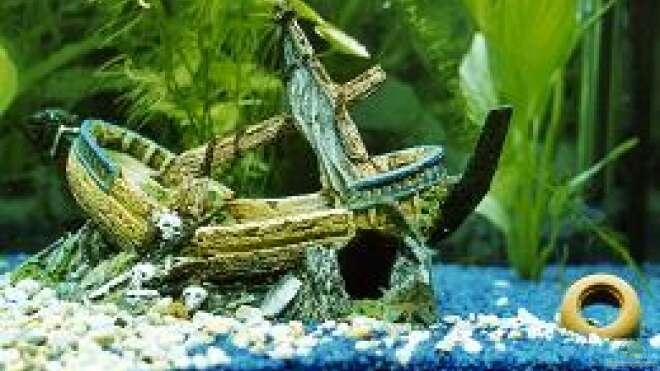 Aquarien mit schiffen als deko einrichtungsbeispiele for Einrichtung deko shop
