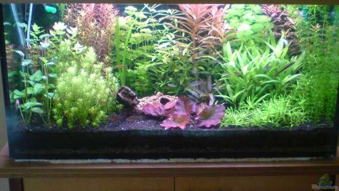 aquarien mit pflanzen aquarium einrichtungsbeispiele. Black Bedroom Furniture Sets. Home Design Ideas
