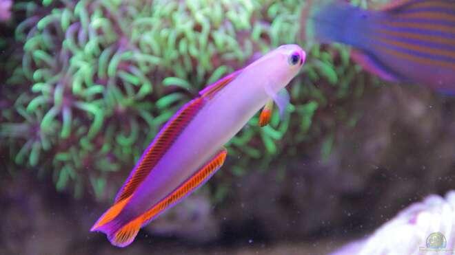 Aquarien mit trimma cana aquarium einrichtungsbeispiele for Asiatische zierfische