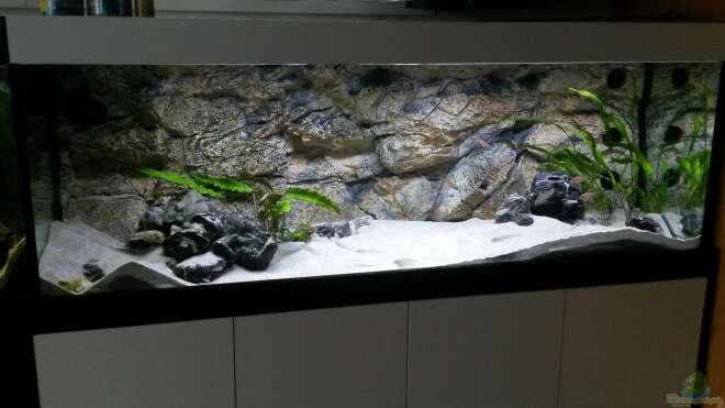 aquarien mit led beleuchtung einrichtungsbeispiele. Black Bedroom Furniture Sets. Home Design Ideas