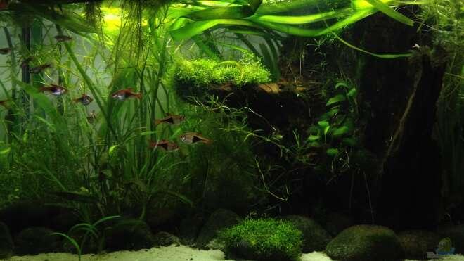 einrichtungsbeispiele f r bachlauf aquarien. Black Bedroom Furniture Sets. Home Design Ideas