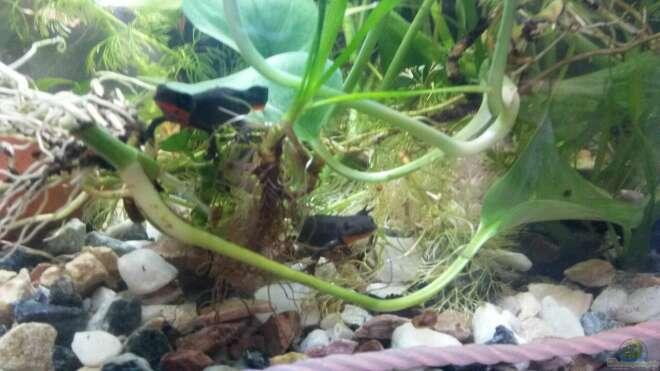 aquarien mit efeutute aquarium einrichtungsbeispiele. Black Bedroom Furniture Sets. Home Design Ideas