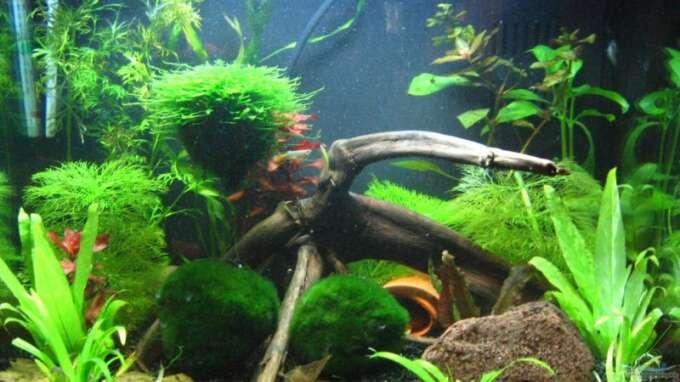 aquarium von sascha gerber becken 10350. Black Bedroom Furniture Sets. Home Design Ideas