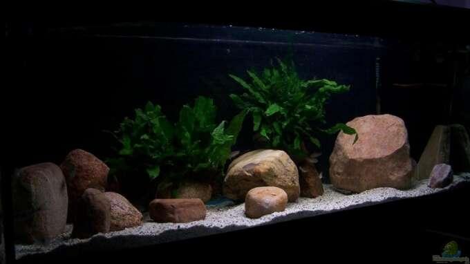 aquarium von maik83 10698 360 liter tanganjika. Black Bedroom Furniture Sets. Home Design Ideas