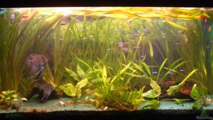 Seite von sirko fricke aquarium einrichtungsbeispiele for Zierfische hannover