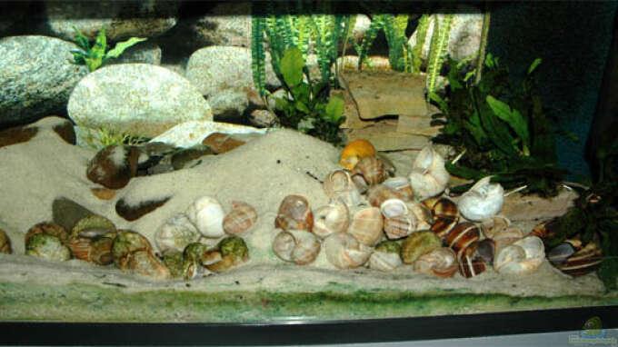 aquarium von volker hebestreit becken 1314. Black Bedroom Furniture Sets. Home Design Ideas