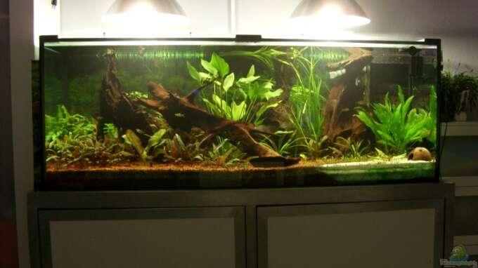 Seite von oliver boden aquarium einrichtungsbeispiele for Boden aquarium