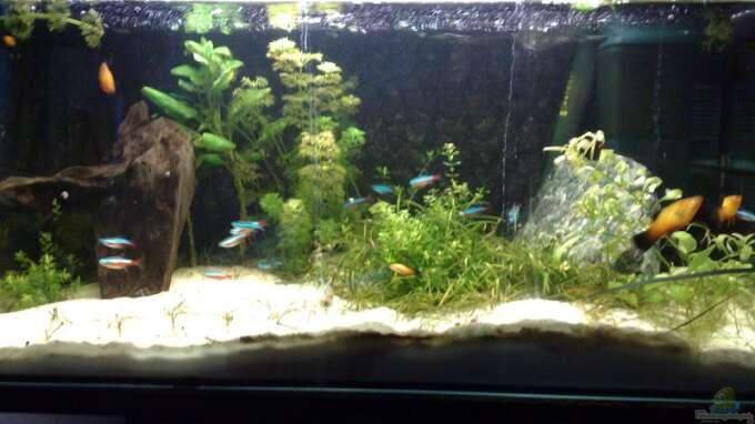 aquarium von welslau: schlafzimmer, Schalfzimmer deko