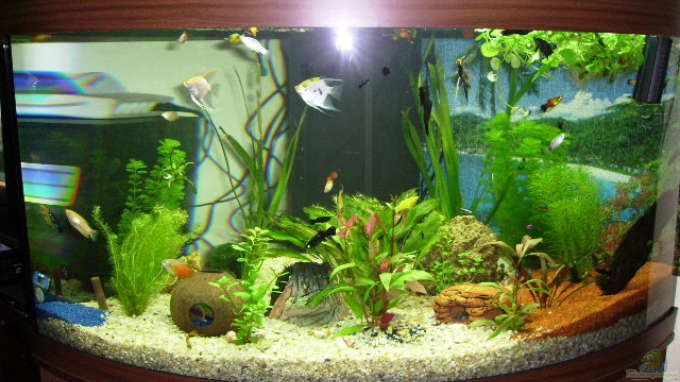 Aquarium von redzac w 13482 trigon 350 for Aquarium einrichtungsideen