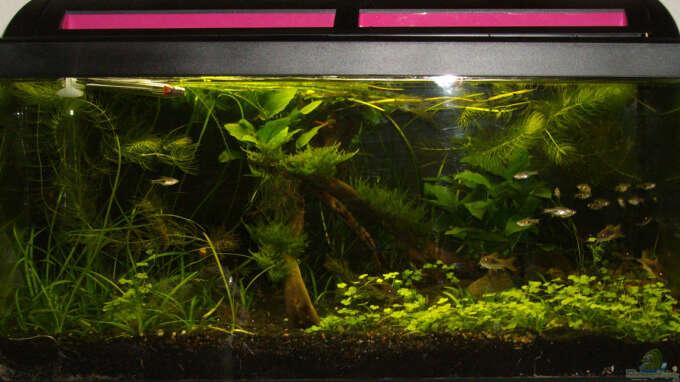 aquarium von dasjin kleines gesellschaftsbecken. Black Bedroom Furniture Sets. Home Design Ideas
