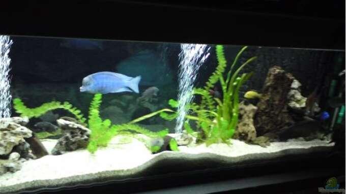 Aquarium von dominik b gershausen becken gro for Zierfische hannover