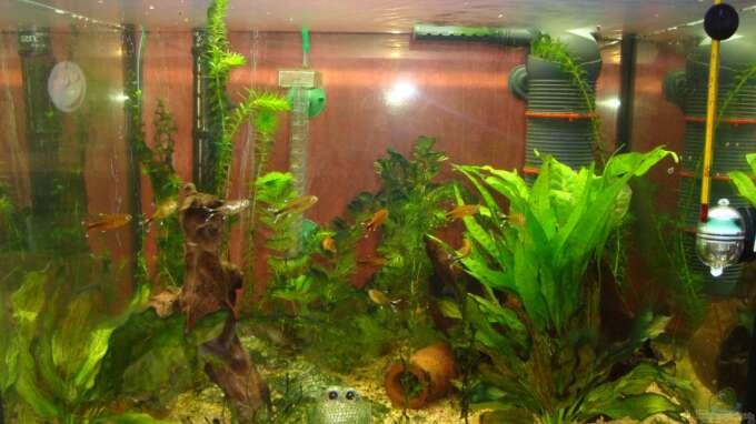 aquarium hauptansicht von mein kleines becken aus mein kleines becken von poldi1981. Black Bedroom Furniture Sets. Home Design Ideas