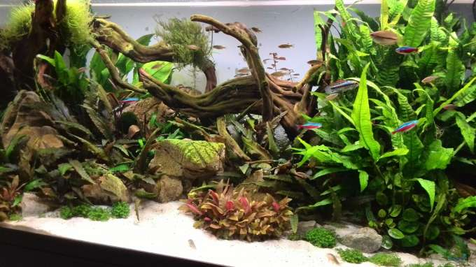1. Aquascape