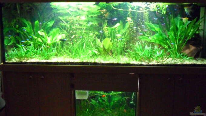 Aquarium von kleines becken  G u00f6rlitzer Wasser